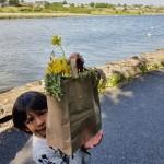 Deenash (Senior Infants) collecting wild flowers