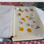Cailin's pressed Flowers - Senior Infants