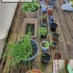 Deenash's Plants