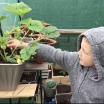 Anthony (R3) growing strawberries in his greenhouse.