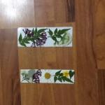 Saai's (R6) Flower Pressings