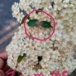 Evan's (R2) Wildflowers