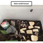 Liams (R3) Snail House