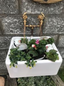 Sé Rooney- G3- Planting flowers