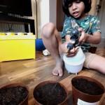 Deenash (Senior Infants) planting seeds