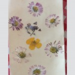 Cailin's (Senior Infants) Pressed Wildflowers