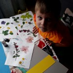 Jakub's (Senior Infants) Flower Pressings